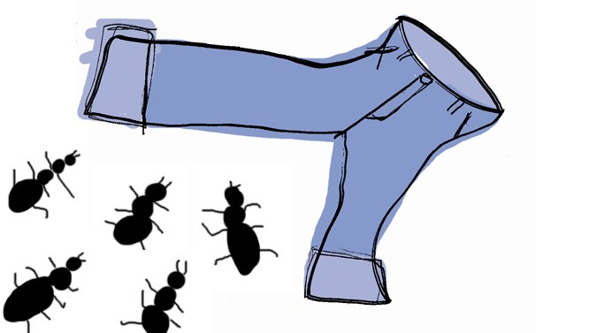 Illustrations picture ants in your pants